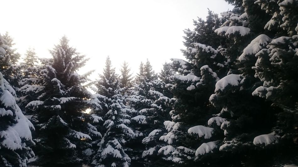 Trees And Sky Snow ❄ Day Cold Temperature Almaty City Almaty, Kazakhstan Wintertime Winter Winter Day Morning Winter Morning
