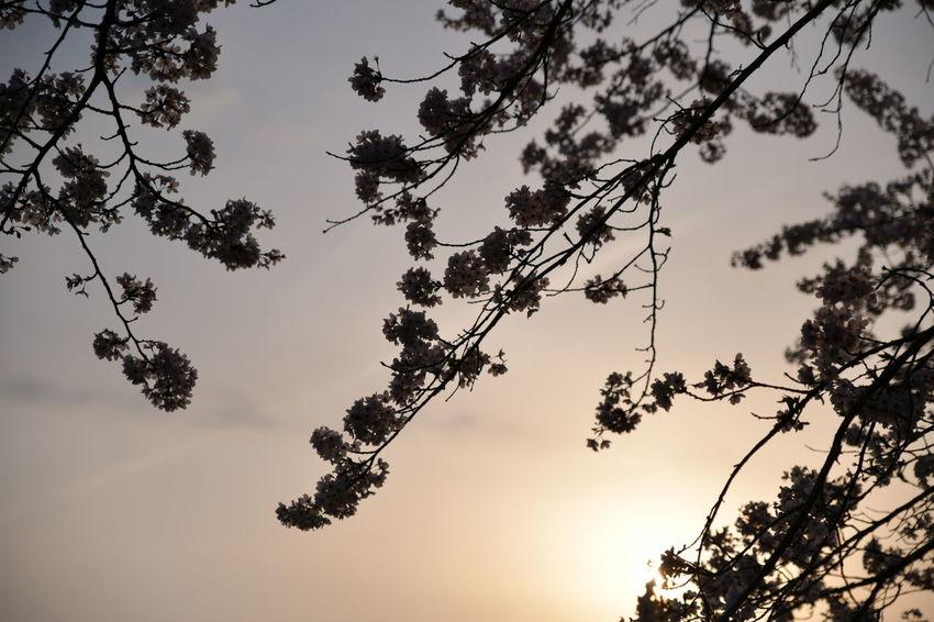 Tree Branch Leaf Sky