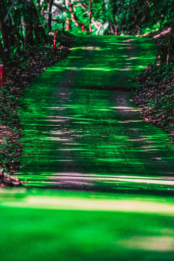 Blurred motion of trees on footpath