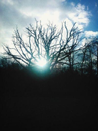 Nature En Foret Ciel Soleil