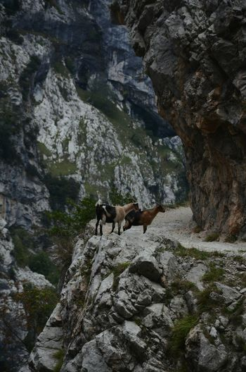 Low angle view of horse on cliff
