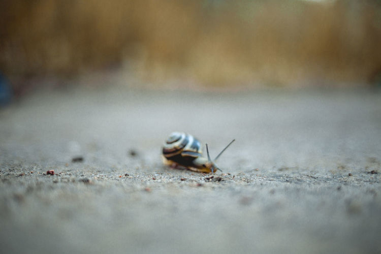 A snail on the park ground Fieldscape Animal Themes Animal Wildlife Animals In The Wild Close-up Day Fields Insect Natural Parkland Nature No People One Animal Outdoors Parliament Selective Focus Surface Level The Minimalist - 2019 EyeEm Awards