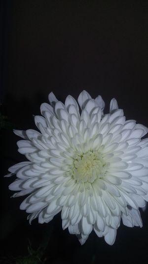 Flower 🌺🌸