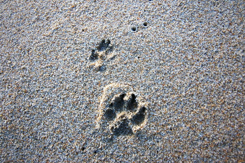 FootPrint Full Frame Backgrounds Pattern Day High Angle View Textured  Outdoors Sand No People Beach Nature
