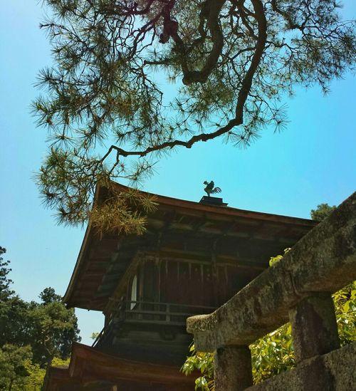 from below || Ginkakuji Temple Silver Pavillion Higashiyama Kyoto, Japan Travels Traveling Explore Nippon GinkakujiTemple SilverPavillion Higashiyama Kyoto Japan travel traveling explore nippon