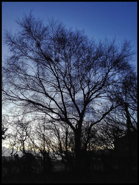Smartshots Sunset Rivington Chorley Lovelancashire Tree Low Angle View Silhouette Sky No People Nature Branch Outdoors Beauty In Nature