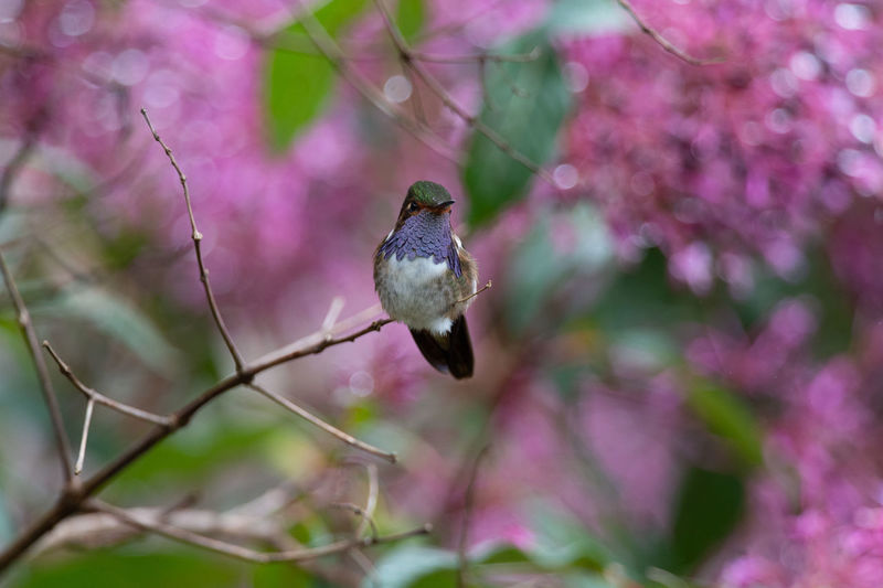 Close-up of bird perching on pink flower