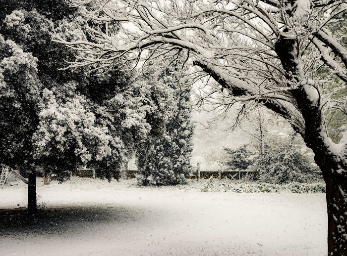 Tree Plant Nature No People Branch Growth Day Beauty In Nature Tranquility Land Snow Outdoors Winter Cold Temperature Field Environment Park Landscape Tranquil Scene Snowing