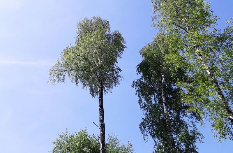 Low angle view of tree against sky on sunny day