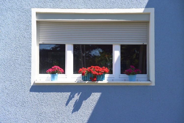 Colorful facade with window Flowering Plant Flower Window Built Structure Architecture Plant Building Exterior Nature Day No People Building Sunlight House Outdoors Potted Plant Shadow Reflection Freshness Glass - Material Window Box Flower Pot Window Frame Flower Arrangement
