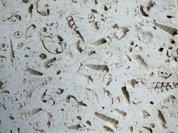 fossil shells in limestone blocks Block Building Exterior Fossil Limestone Fossil Rock Fossils Fossils And Rocks Paving Stone She Slabs