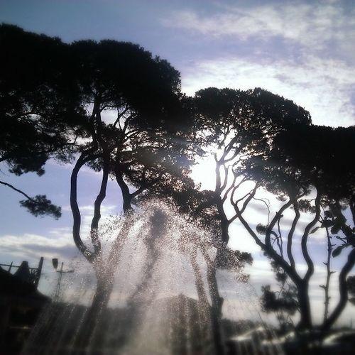 Landspace Sun Tree