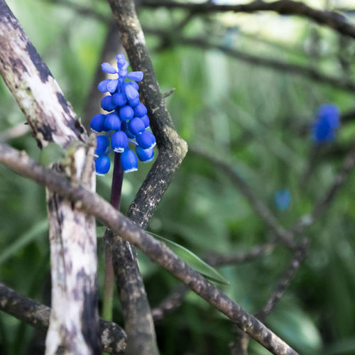 Close-up of purple flowering plant on branch