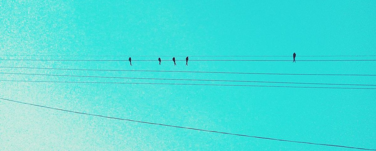 Birds Togetherness Lonely