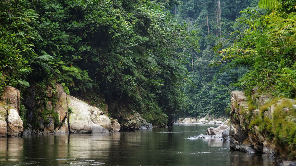 Kerinci Seblat Sanctuary at Jambi Rain Forest Indonesia Tree Water Waterfront River Green Color