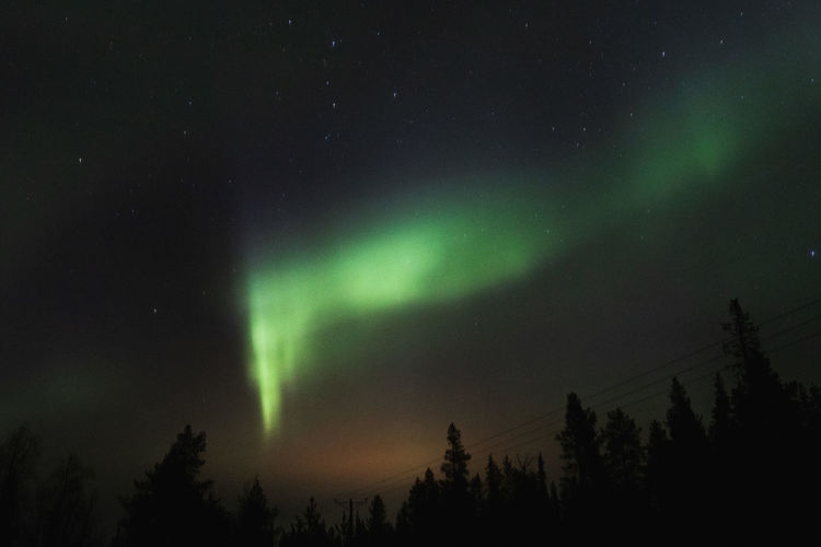 Beauty In Nature Night Scenics - Nature Astronomy Star - Space Space Tree Sky Tranquility Tranquil Scene Green Color Low Angle View Plant Silhouette No People Nature Idyllic Non-urban Scene Natural Phenomenon Environment Aurora Polaris Power In Nature EyeEm Nature Lover