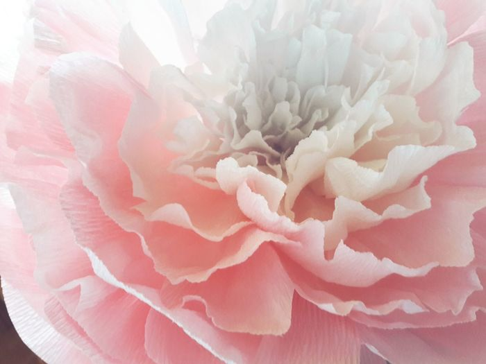Light Paperflower Paperdesign Crepe Paper Paper Flower Pink Color Textured  No People