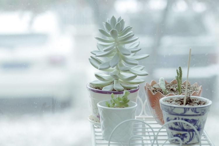 小盆栽棵小芽,天天盼它长大,忽然放开牙爪,模样实在可怕。 window Potted Plant Plant Close-up Growth Window Freshness