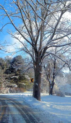 Winter Snow Bare Tree Cold Temperature Nature Branch Beauty In Nature Outdoors Day Road Sky Shades Of Winter