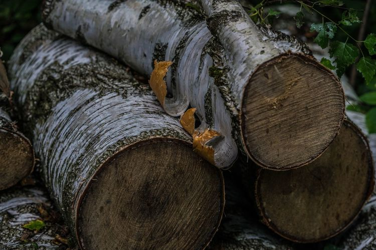 Close-up Day Deforestation Environmental Issues Forestry Industry Fossil Fuel Fuel And Power Generation Heap Industry Log Lumber Industry Nature No People Outdoors Pile Stack Textured  Timber Tree Ring Wood - Material Woodpile