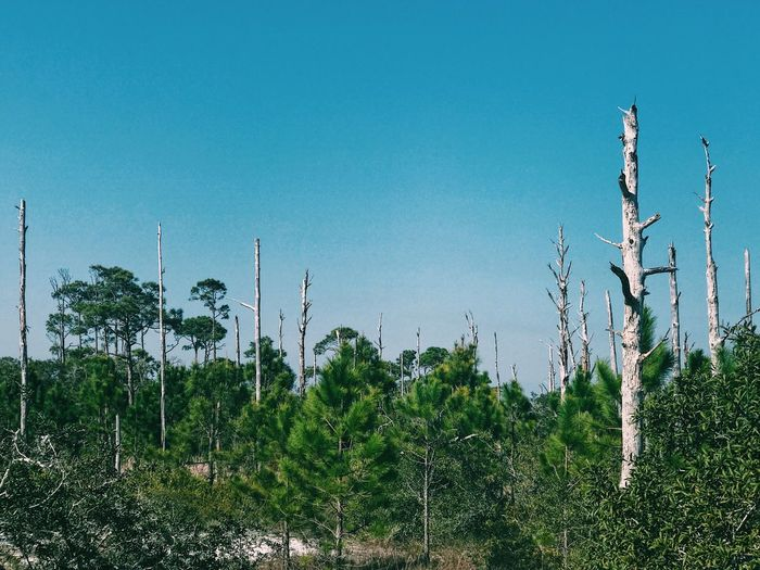 Trees Clear Sky Nature Low Angle View Green Color Beauty In Nature Tranquil Scene Day Scenics Outdoors Break The Mold The Great Outdoors - 2017 EyeEm Awards