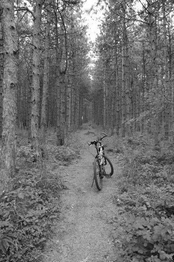 Bulgaria In Forest Blackandwhite Photography Bicycles