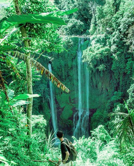 Bali Green Color Nature Outdoors Water Tree Day Growth