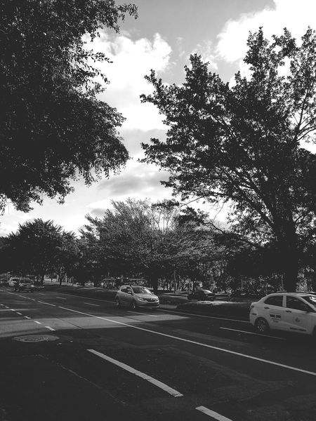 Car Tree Sky Transportation Nature Outdoors No People Day Land Vehicle Road Cloud - Sky Relaxing Colombia Enjoying Life Hello World Black And White First Eyeem Photo Tree Lovely Beauty In Nature Scenics