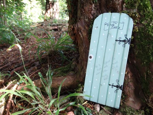 Fairy door. Text Day Outdoors Communication Green Color No People Plant Tree Growth Nature Close-up Fairy Fairy Door Door Forest Fantasy Trees Forest Floor Ground Surface Level