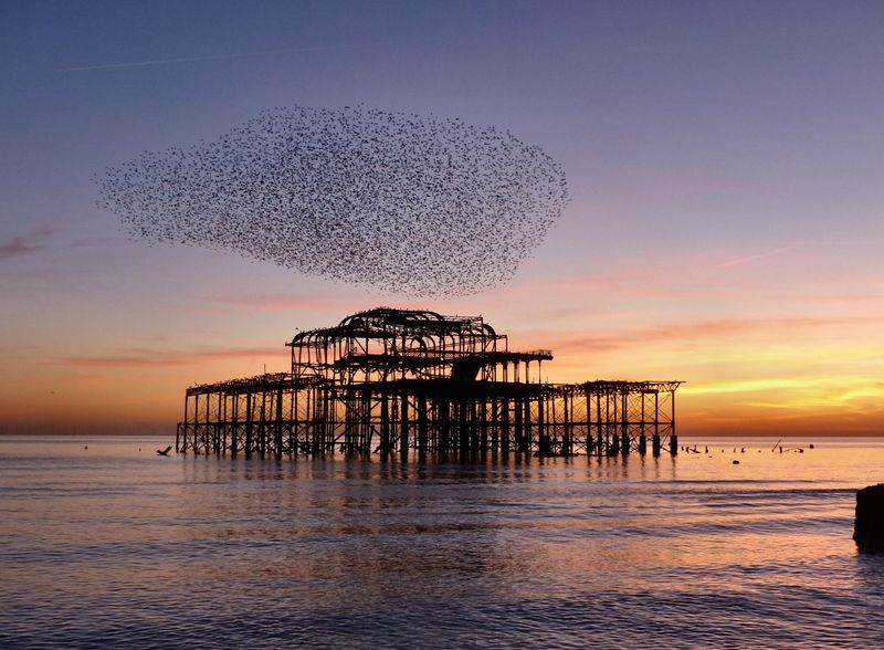 The murmarations over the West Pier, Brighton - December 2017. East Sussex England, UK Architecture Beach Beauty In Nature Brighton Uk Built Structure Day Horizon Over Water Murmuration Nature No People Outdoors Scenics Sea Silhouette Sky Starlings Sunset Tranquil Scene Tranquility Water West Pier West Pier, Brighton