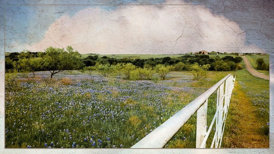 Storybook Landscape Pastel Power Bluebonnets Spring Spring Flowers Spring Landscape Landscape Landscape_photography Textures Artistic Artistic Photo Texas Countryside Tadaa Community Eye4photography  Ladyphotographerofthemonth Femalephotographerofthemonth EyeEm Gallery Art Photography