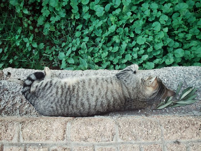 View of cat resting