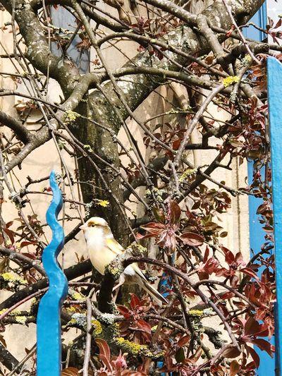 #oiseau Tree