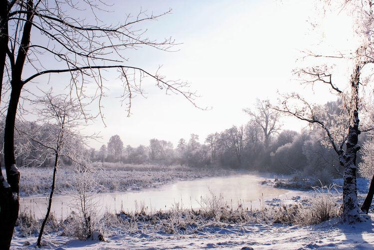 Minsk, Loshica Park Frozen Snow ❄ Winter Beauty In Nature Cold Cold Temperature Landscape Nature No People