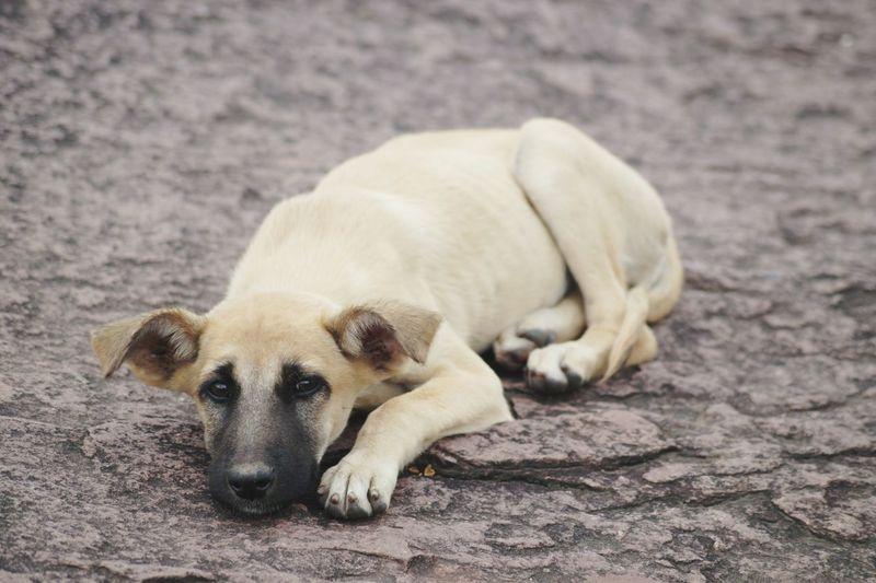 Close-up of dog lying on ground