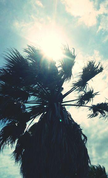 Palmiers 🌴👣
