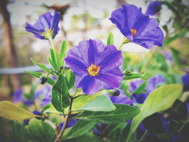 Purple Flower Flower Beauty In Nature Nature Freshness Growth Flower Head Close-up Plant Blooming No People Outdoors Day Lefka Cyprus Lefka, Cyprus