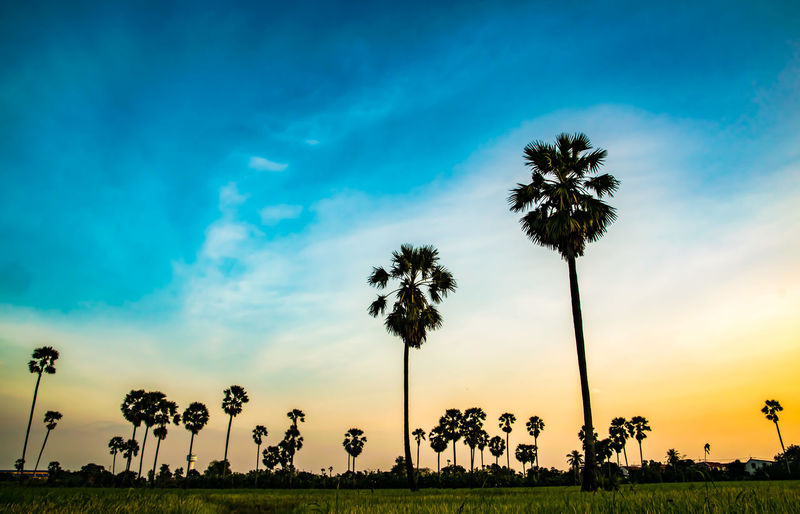 tree palm beautiful in evening Palm Tree Tree Sky Sunset Cloud - Sky Grass Silhouette Landscape Nature Outdoors Beauty In Nature Day