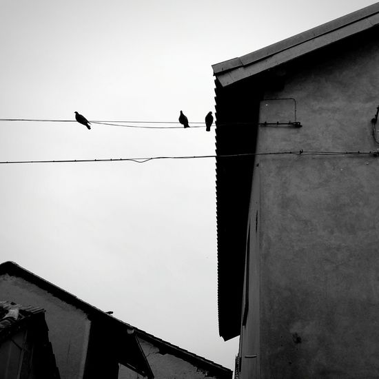 Bird Outdoors Building Exterior Flying Day Animal Wildlife Animals In The Wild Built Structure No People Architecture Sky Animal Themes Birds Birds Silhouette Silhouettes Black And White Bw_collection Bw Photography Quiet Place  Quiet