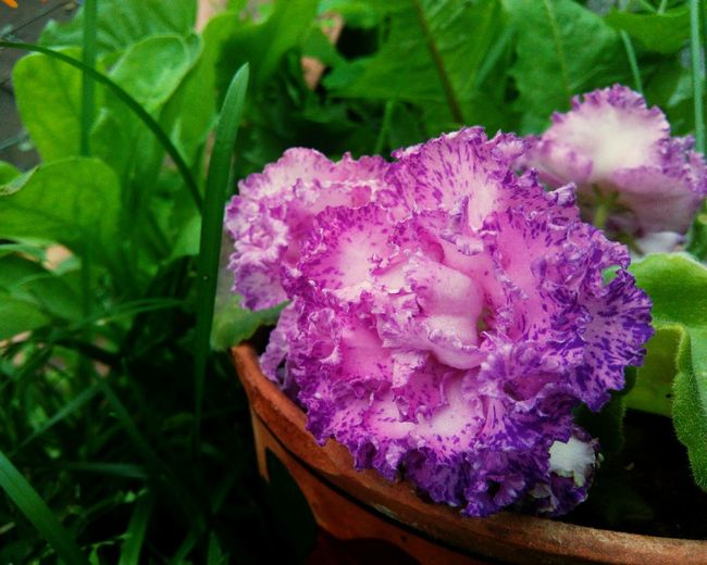 Purple Nature Flower Plant No People Close-up Day Outdoors Growth Beauty In Nature Fragility Flower Head Freshness