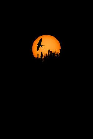 Beauty In Nature Bird Bird On Sun Silhouette Bird Silhouette Birds Circle Copy Space Dark Geometric Shape Illuminated Low Angle View Nature Night No People Orange Color Outdoors Plant Scenics - Nature Silhouette Sky Space Sun Sun Silhouette Sunset Tree