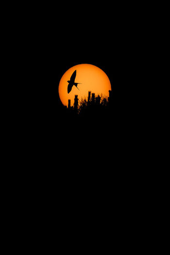 Beauty In Nature Bird Bird On Sun Silhouette Bird Silhouette Birds Circle Copy Space Dark Geometric Shape Illuminated Low Angle View Nature Night No People Orange Color Outdoors Plant Scenics - Nature Silhouette Sky Space Sun Sun Silhouette Sunset Tree