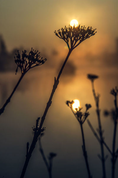 Beauty In Nature Close-up Day Flower Flower Head Fragility Freshness Growth Nature No People Outdoors Plant Sky Sun Sunset Water