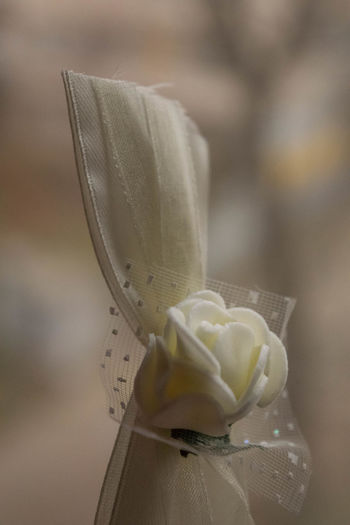 Macro Photography Wedding Details Beige Tones Bokeh Bokeh Photography Close Up Close-up Closeup Corsage Flower Flower Head Focus On Foreground Fragility Freshness Indoors  Inflorescence Macro No People Petal Purity Selective Focus Vertical Wedding Decoration Wedding Detail White Color