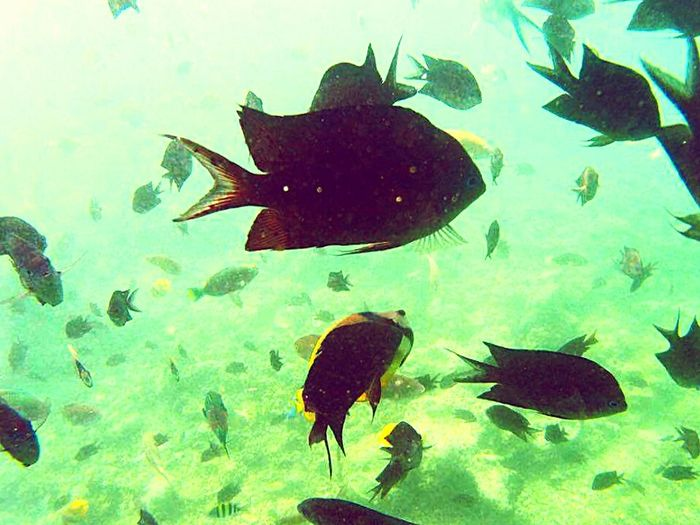 I wonder what the fishes are thinking?=) IExplorePH Livelifetothefullest PuertoGaleraSeries Lostinph