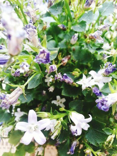 Flowers Violet Stunning Nature Motherearthisamazing