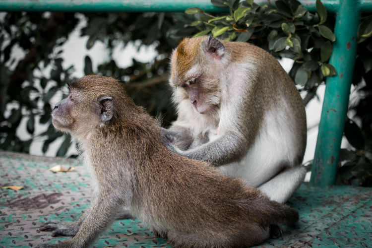 Group Of Animals Animal Themes Animal Mammal Two Animals Animal Wildlife Animals In The Wild Focus On Foreground Young Animal Primate Togetherness Vertebrate Monkey Sitting Day No People Animal Family Outdoors Looking Care Monkey Forest Monkyface Lifestyles Family