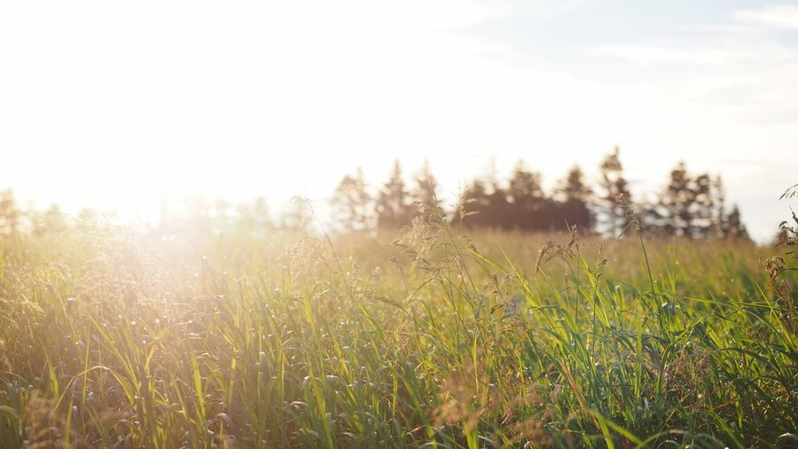 Morning Sky Morning Backgrounds Japan Copy Space Plant Growth Field Nature Beauty In Nature Land Sky Tranquility Environment No People Tranquil Scene Landscape Grass Day Tree Outdoors Scenics - Nature Rural Scene Non-urban Scene Dew