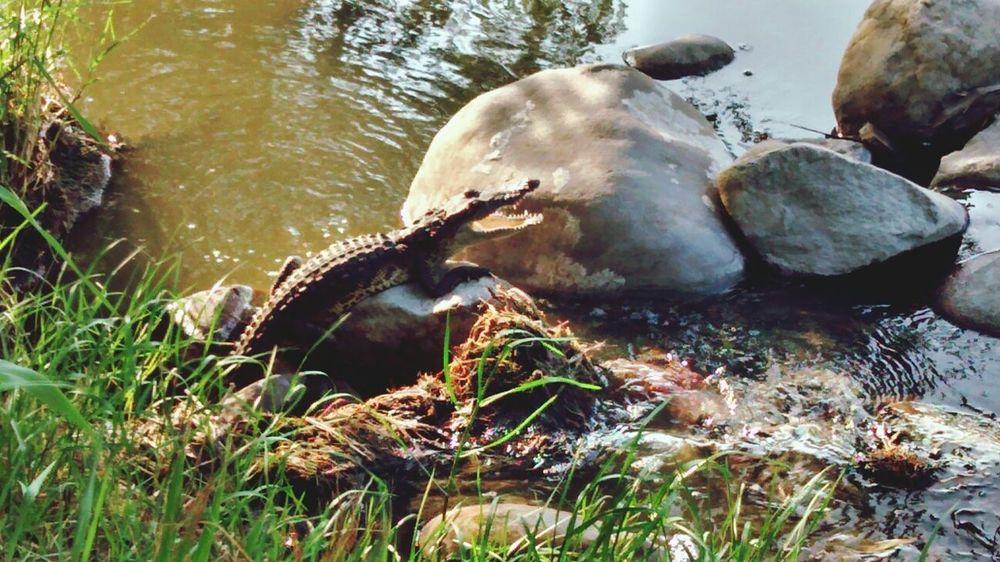 lagura del carpintero Animals Relaxing Wildlife & Nature Check This Out