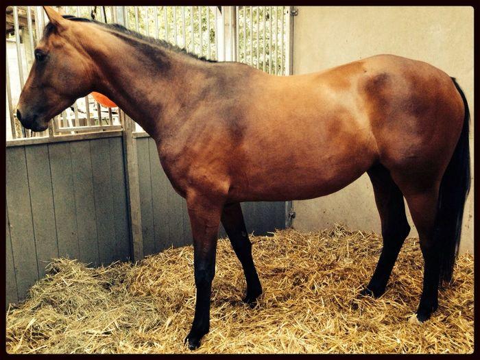 Anna Grace haar nieuwe woonst. Anna Grace My Horse Horse School